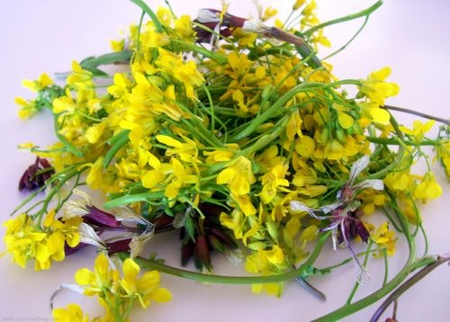 Kale Flowers